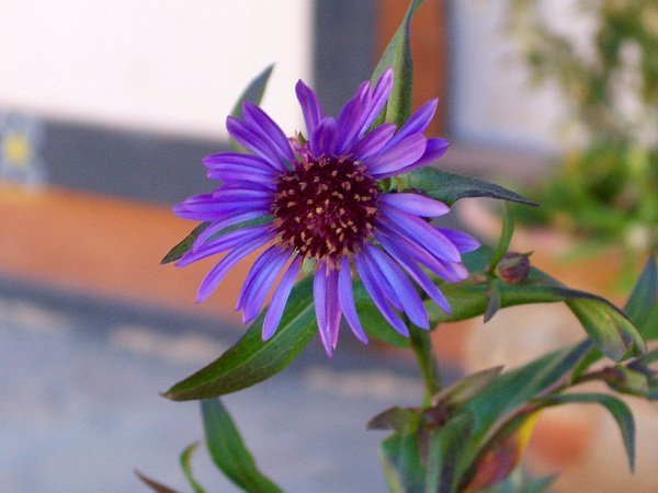 Best Places To Visit In Thimphu, Bhutan - Flower in Bhutan