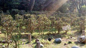 What To See In Hong Kong - Tea Plantation