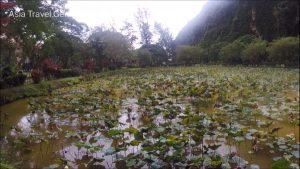 Things To Do In Ipoh - Kek Look Tong (極樂洞) - Lotus Pond