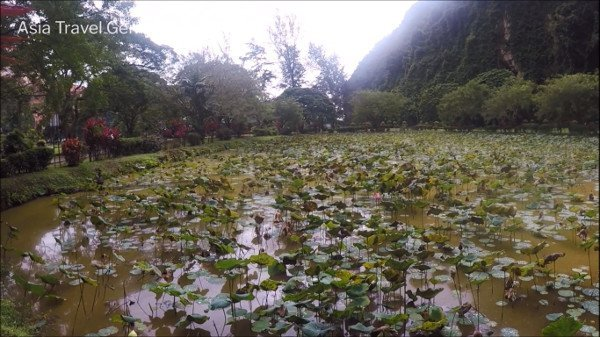 Things To Do In Ipoh - Kek Look Tong (極樂洞) - Lotus Pond