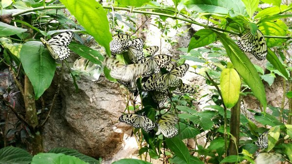 Cluster of White Butterflies