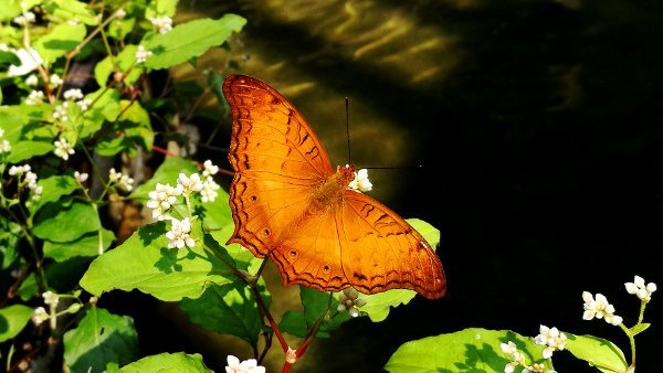 A Charming Copper Butterfly
