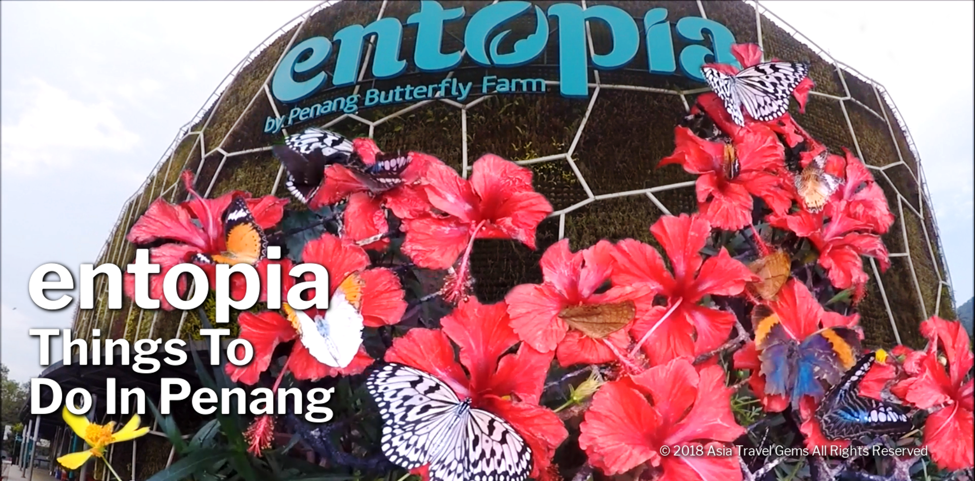 Things To Do In Penang - Entopia Butterfly Farm - header
