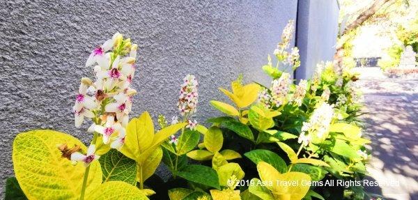 Beautiful Flowers and Lush Greenery along Pathway to Villa